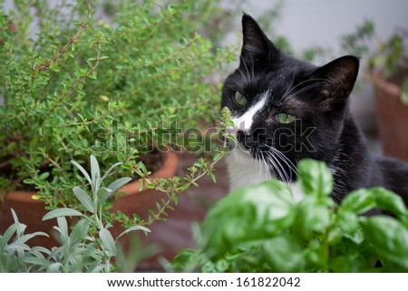 A black and white cat smelling potted plants. - stock photo