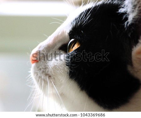 A black and white cat with focus on its eye