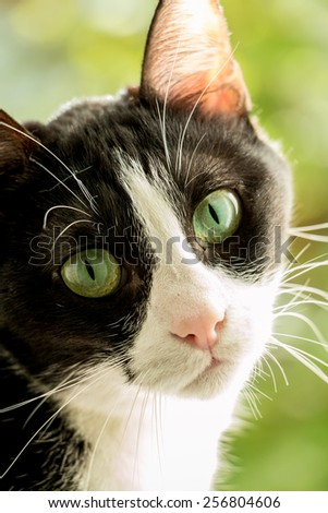 a black and white cat with green background - stock photo