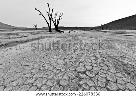 A black and white close up of the dried,cracking surface of Doodvlei in the Sossusvlei area of Namibia. A telling illustration of how the lack of water affects the soil. The ancient dead trees. - stock photo