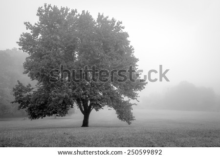 A black and white foggy view of a tree in a field in Freehold New Jersey. - stock photo