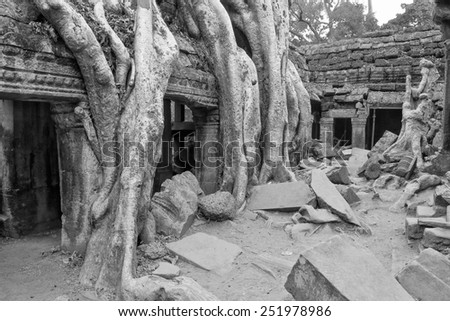 a black and white image of ancient ruins which are slowly being taken over by the Cambodian rainforest - stock photo