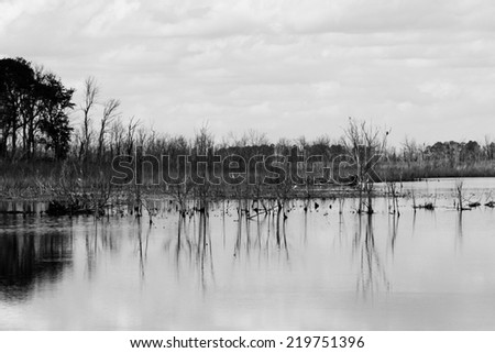 A black and white image of marsh with water reflections.