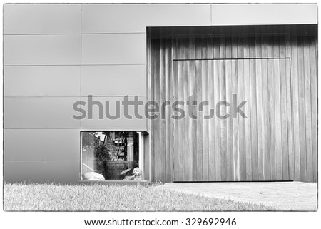 A black and white photograph of a white dog and a brown dog waiting in front of a low window at a house with timber and aluminium cladding, this with a fine art filter and a vintage border - stock photo