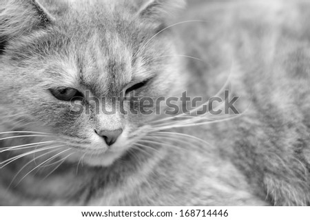 A black and white shot of a relaxed adult fluffy cat - stock photo