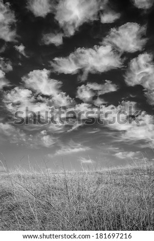A black and white shot of wild dry brush on a hill with bright white clouds in the background. - stock photo