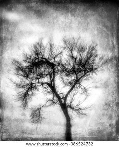 A black and white silhouette of a bare, winter tree at sunset with an added artistic texture giving the image an ethereal feel.