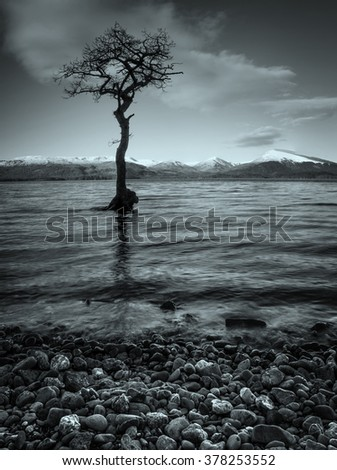 A black and white sunset over lone tree at Loch Lomond - stock photo