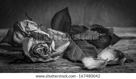 A black and white vintage image of a rose on wooden table - stock photo