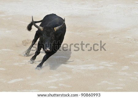 A black bull charging towards camera - stock photo
