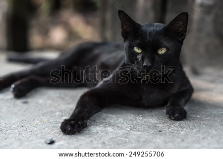 A black cat in community - stock photo
