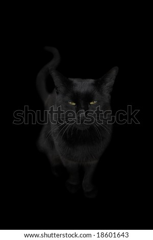 a black cat on a solid black background