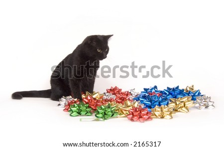 A black cat sits amongst a pile of Christmas bows on a white background - stock photo