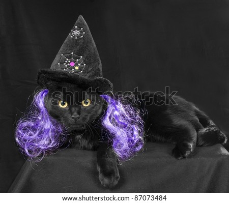 A black cat with a cap on the head witch and purple hair in a dark room - stock photo