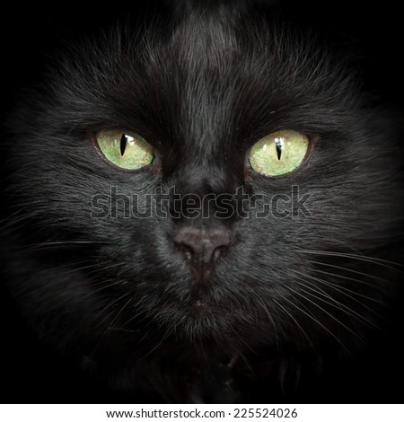 A black cat with two yellow eyes and whiskers. - stock photo