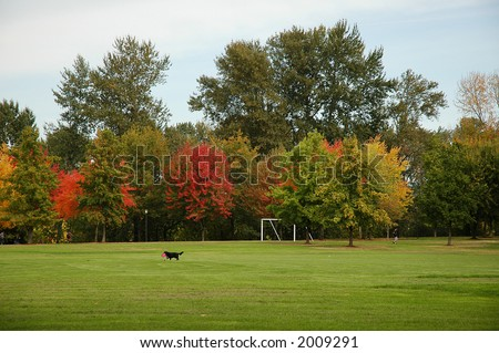 A black dog plays catch on a green field with vibrant trees in background