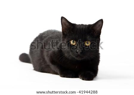 a black kitten on a white background - stock photo