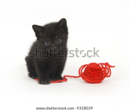 A black kitten plays with a ball of red yarn on a white background - stock photo