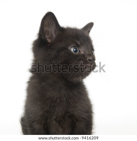 A black kitten sitting on a white background and looking to the right