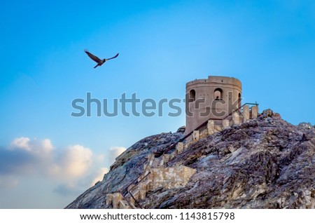 stock-photo-a-black-seagull-flying-adjac