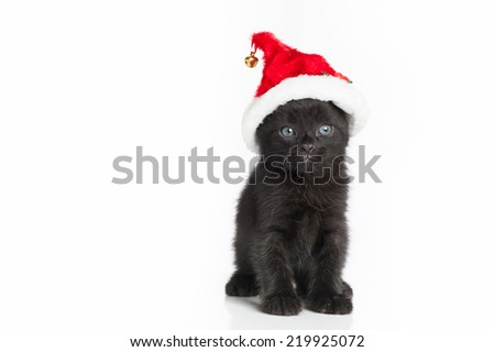 A black Tabby kitten with big, blue eyes, wearing a red and white Santa hat. Shot in the studio on an isolated, white background. - stock photo