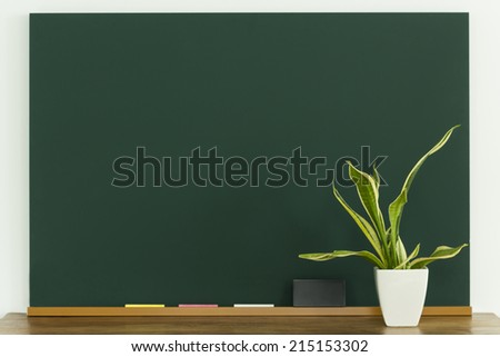 A blackboard and houseplant - stock photo