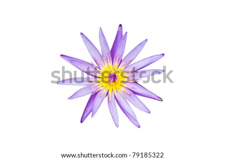 A blooming lotus flower isolate on white backgruond - stock photo