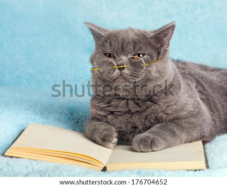 A blue british cat is wearing glasses lying on the book - stock photo