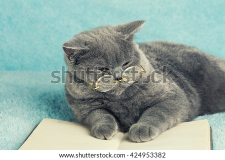 A blue british cat is wearing glasses lying on the book and reading