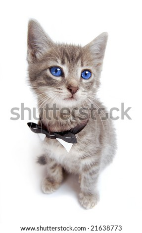 A blue eyed kitten with large ears and a bow tie. - stock photo