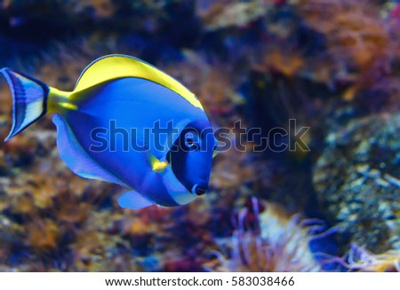 a blue fish in the aquarium