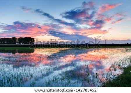 A blue sunset over rice fields - Lombardy - Italy - stock photo