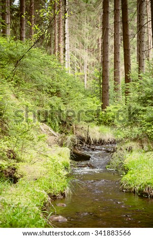 A body of water in a coniferous forest in summer