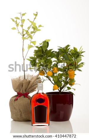 A bottle of sloe gin alongside a potted fruit-bearing calamondin tree and a sloe bush.