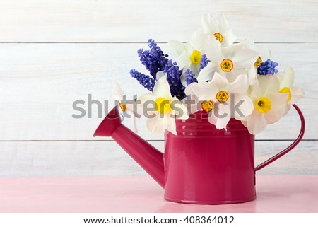 a bouquet of fragrant white daffodils and blue Muscari in the iron watering can on wooden background - stock photo