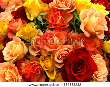 A bouquet of multicolored roses. Floral pattern. - stock photo