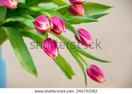 a bouquet of pink tulips left justified - stock photo