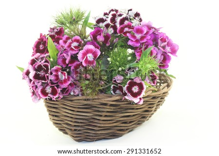 a bouquet of Sweet William on a light background