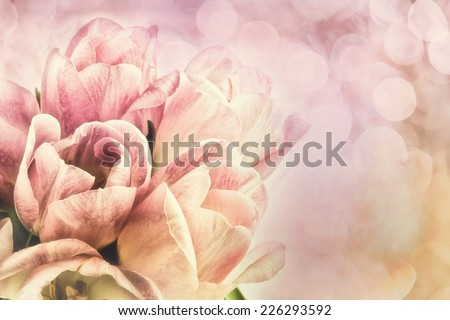 A bouquet of white and pink tulips in bloom against a bokeh background.  Room for copy space.  Filtered for a retro vintage look.  - stock photo