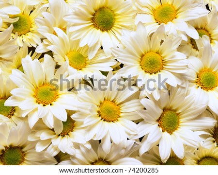 a bouquet of white daisies - stock photo