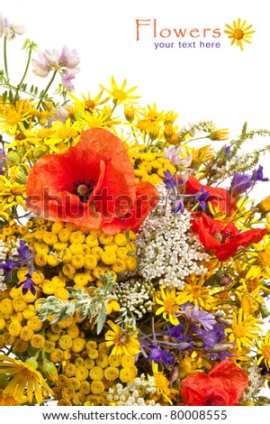 A Bouquet of wildflowers on the white background - stock photo
