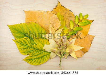 A bouquet of yellow, green autumn leaves and seeds. - stock photo