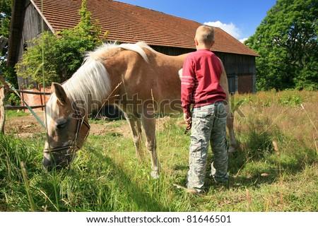 A boy cleans a horse - Haflinger - stock photo