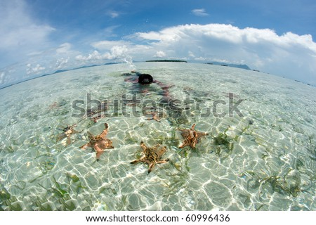 a boy collect a lot of starfish in fish eye view - stock photo