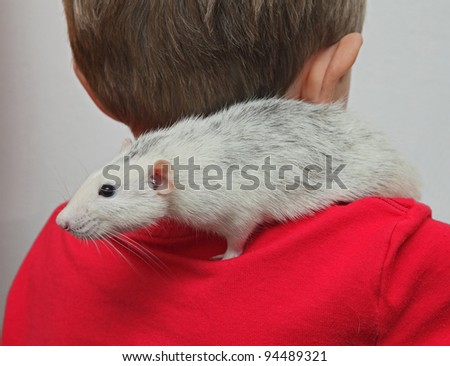 a boy with a home rat at the shoulder - stock photo