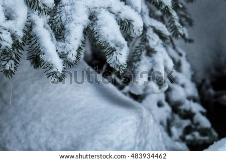 A branch covered with snow in a forest in Bergen