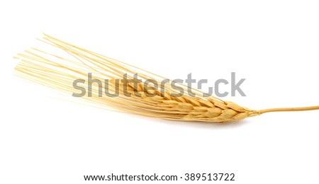 A branch of dry wheat