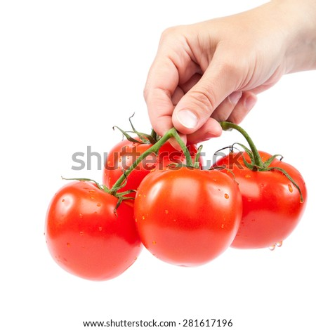 A branch of fresh tomatoes in hand isolated on white background. - stock photo