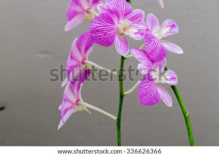 A branch of orchid isolated on balcony�s wall of public housing (HDB) flats in Singapore. Growing trees in a sharing apartment's balcony is very popular in Singapore - stock photo