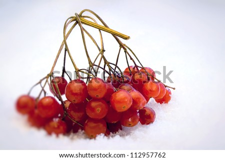 A branch of red berries in the snow - stock photo